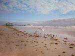 birds chilling on beach