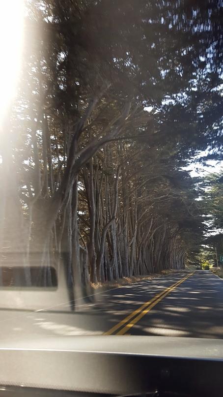 TreesFromCar